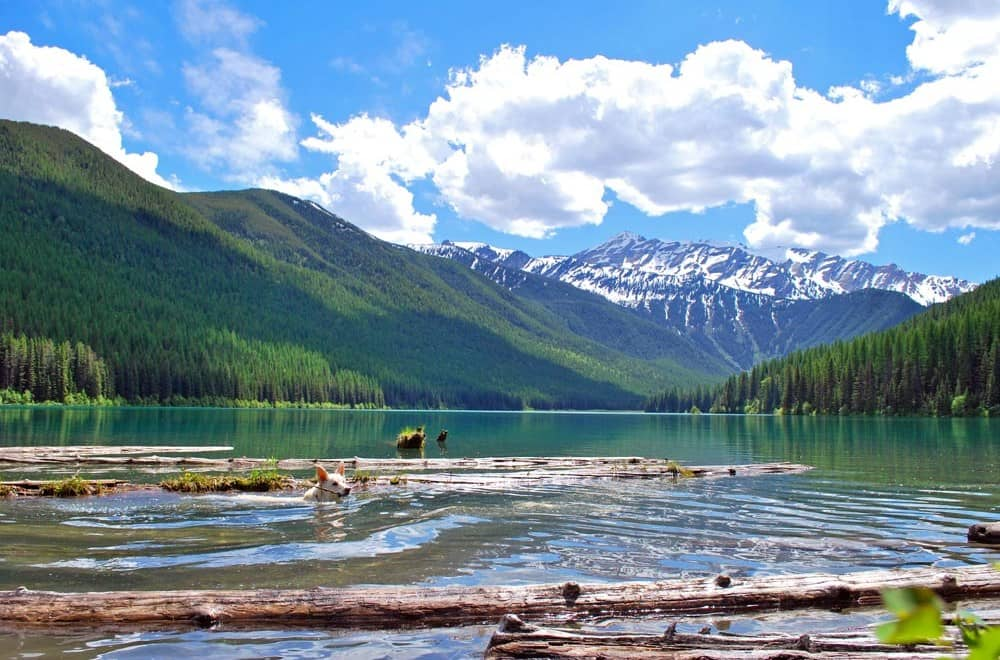 Mia-in-Stanton-Lake-Great-Bear-Wilderness-Montana-USA
